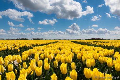 Wolken en tulpen