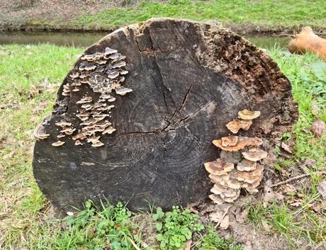 Paddestoelen op een boomstam