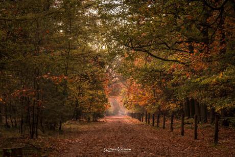 Herfst in Surea