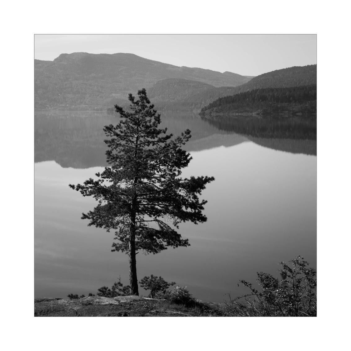 Krøderen - - - foto door Joshua181 op 30-09-2017 - deze foto bevat: lucht, water, natuur, vakantie, spiegeling, landschap, bomen, bergen, meer, noorwegen, zwartwit, reisfotografie