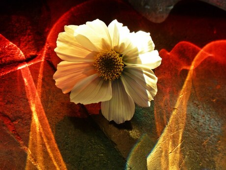 Flower and colors....