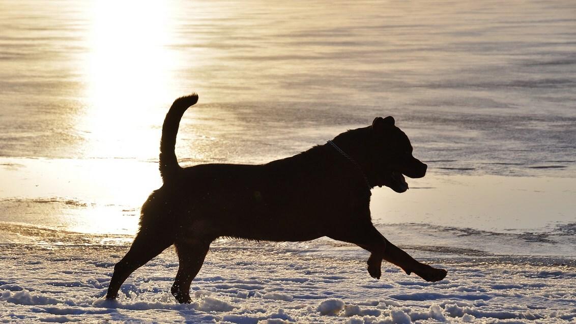 Nog éven genieten... - ...voor de week weer begint met regen en werk. Als een afscheid van weekend, sneeuw en ijs schijnt de zon over het IJ(s)meer.  Met veel foto's en ko - foto door peetje_digitaal op 17-01-2010 - deze foto bevat: zon, sneeuw, zonsondergang, ijs, hond, tegenlicht, rottweiler, beweging, eigenraam