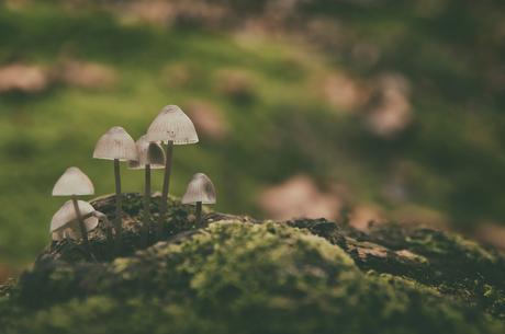 Dreamy mushrooms
