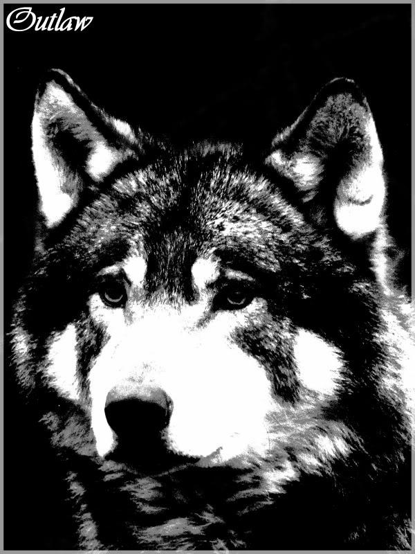 OUTLAW - Even een foto bewerkt (voor het eerst op ZOOM.NL) van een wolf... - foto door CoonArt op 17-01-2018 - deze foto bevat: wolf, natuur, huisdier, hond, kunst, bewerking, wildlife, contrast, photoshop, creatief, bewerkingsopdracht, bewerkingsuitdaging