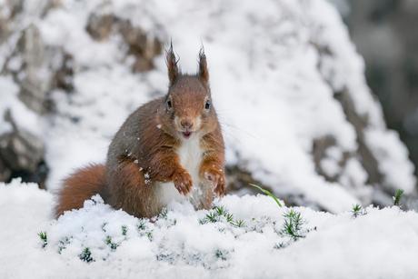 Joepie sneeuw op komst!