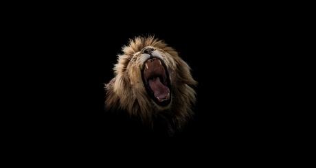 Leeuw portret Breed