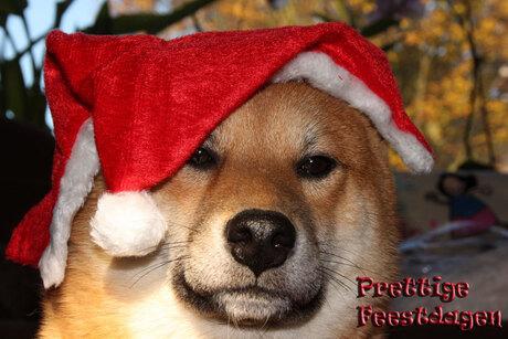 Prettige feestdagen voor iedereen !