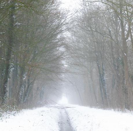 liggende boom sneeuw gecropd (1 van 1)