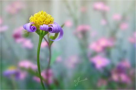 Een vrijdagavond bloemetje........
