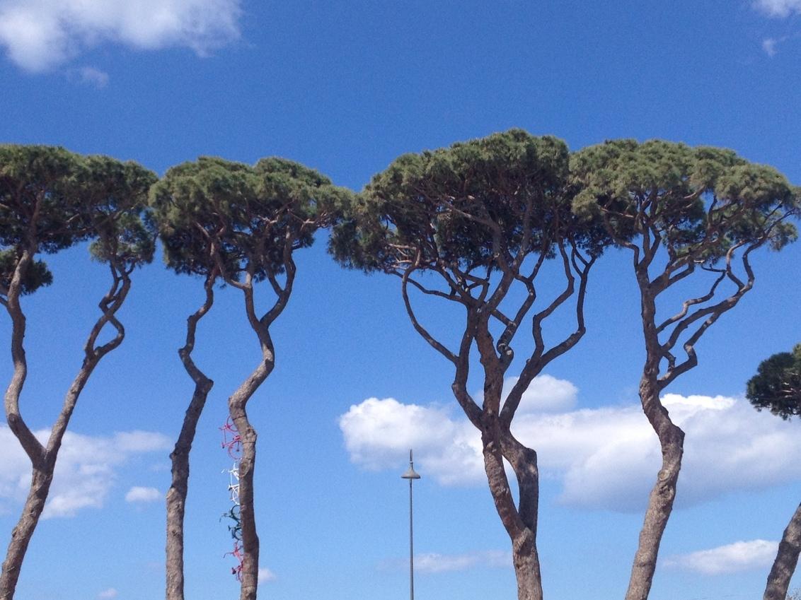 Italian tree line mixed with urban - - - foto door AngelBoy op 28-04-2016 - deze foto bevat: zon, boom, natuur, licht, vakantie, bos, zomer, tree, italie, line, tree line