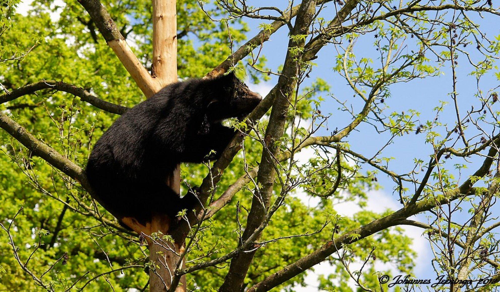 De beer is los. - Alvast bedankt voor jullie reactie's.  Gr, Johannes. - foto door cowiefotografie op 05-01-2013 - deze foto bevat: dierentuin, dieren, beren