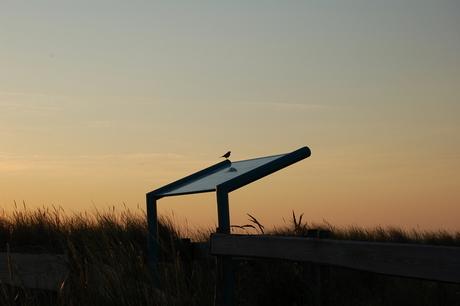 vogel als wegwijzer
