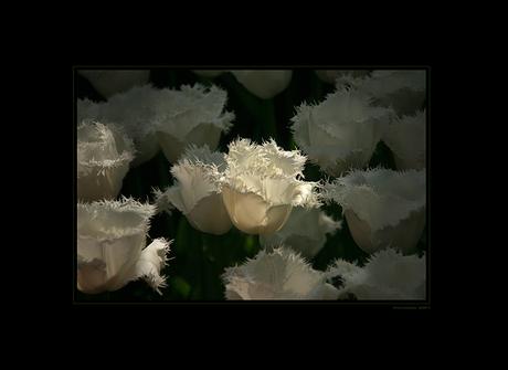 Flower Power VI