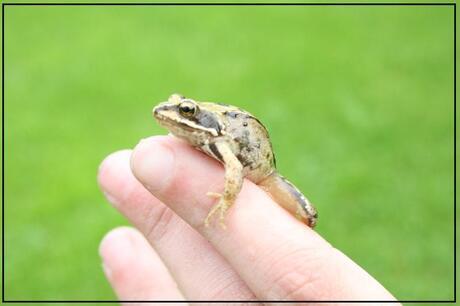 Froggy 1