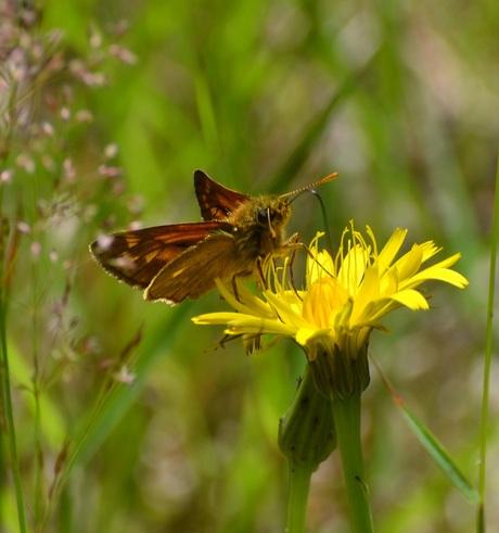 vlinder geniet