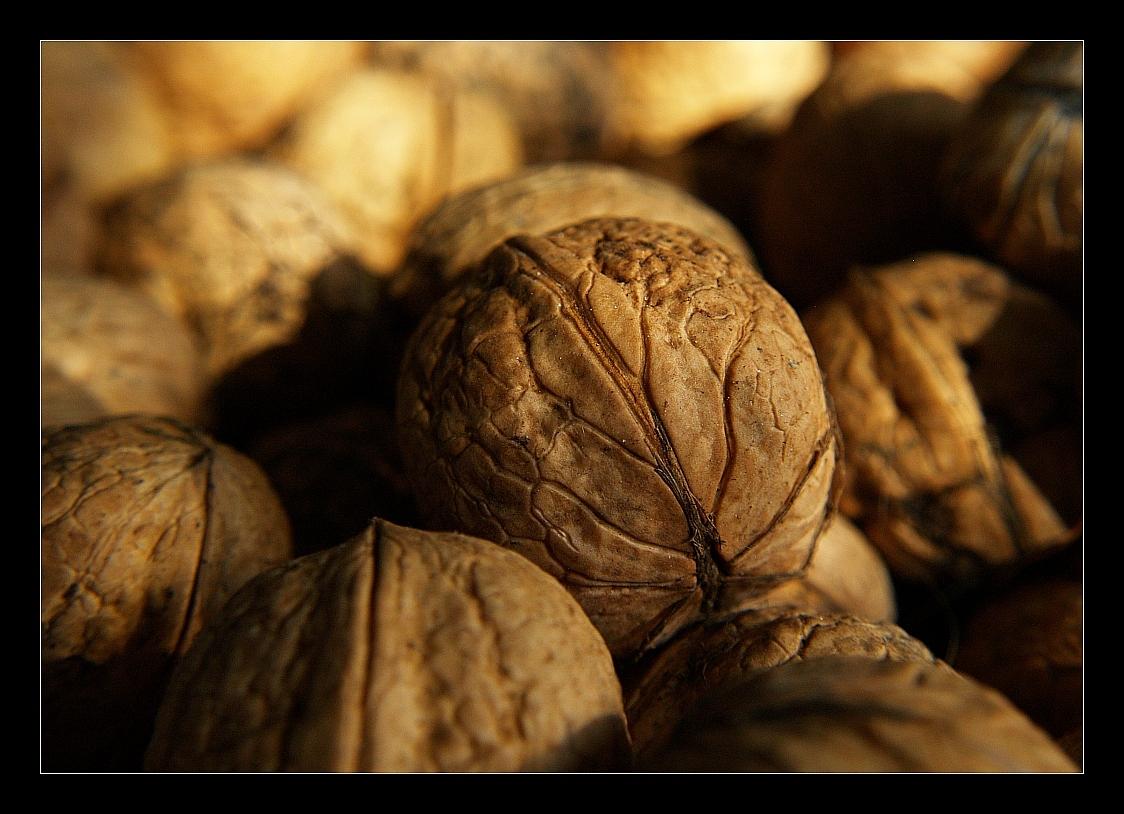 brains or walnuts - Een close up van een aantal walnoten. Wanneer ik ze een beetje van dichtbij bekijkt dan krijg ik andere associaties.......... - foto door juriheise op 23-10-2009 - deze foto bevat: walnoot