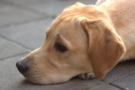Onze lieve hond Sam
