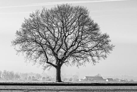 Het einde van winter
