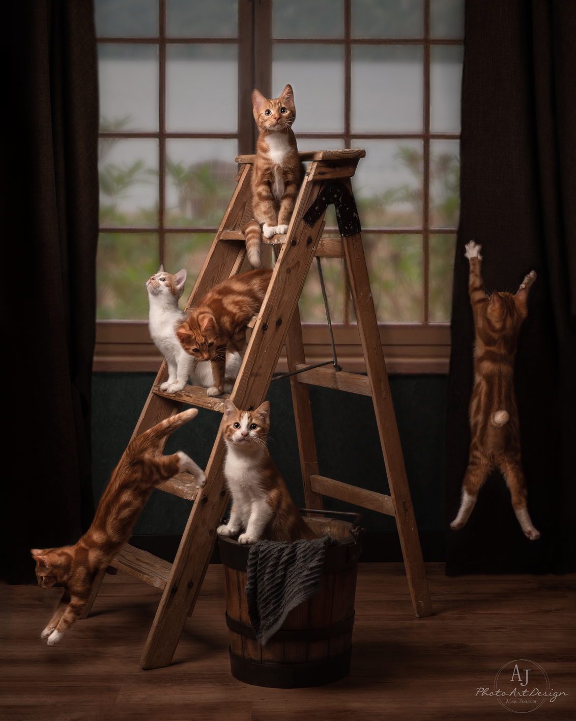 Een katten huishouden - Weet jij wat jouw huisdieren doen, als je niet thuis bent?   Mijn huisdieren hebben soms hele avonturen in de woonkamer met soms een kleine verbouw - foto door AJ-fotografie op 13-01-2021 - deze foto bevat: kitten, dieren, huisdier, kat, nikon, photoshop, flitslicht, studiofotografie, fineart, Godox, fineartfotografie