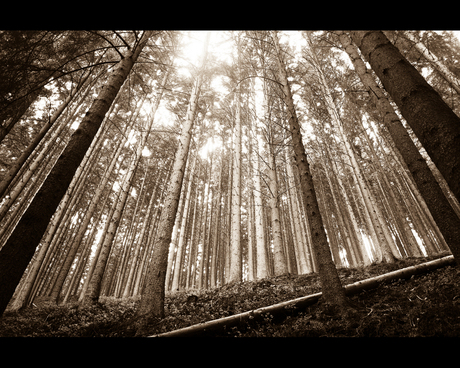 Sepia Forest