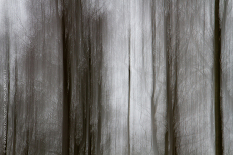 moving trees no 11
