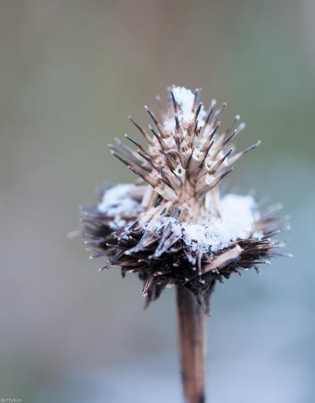 (Sneeuw-)Zonnehoed