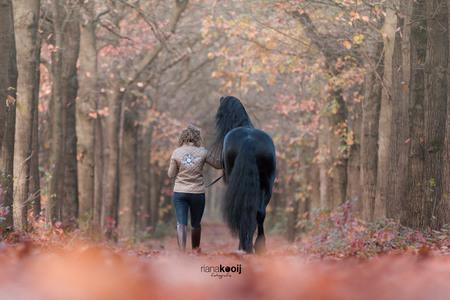 Friese hengst - Afgelopen zondag deze Friese hengst op de foto mogen zetten. Er waren een hoop dames in de buurt aanwezig, dus echt model staan, zag deze heer niet z - foto door riana op 31-10-2017 - deze foto bevat: paarden, herfst, paard, horses, hengst