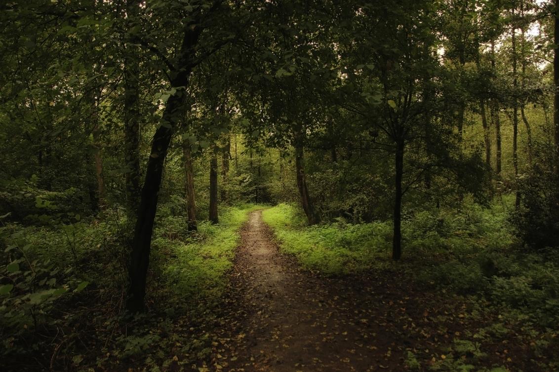 sfeervol wandelen in ons bos 2067 - - - foto door onne1954 op 30-09-2020 - deze foto bevat: groen, boom, natuur, licht, herfst, blad, landschap, bos, tegenlicht, nederland