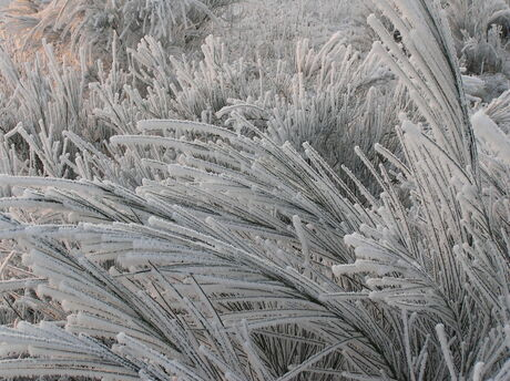 Winter waaier