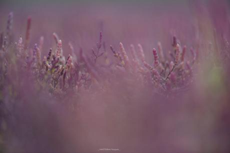 Purple world