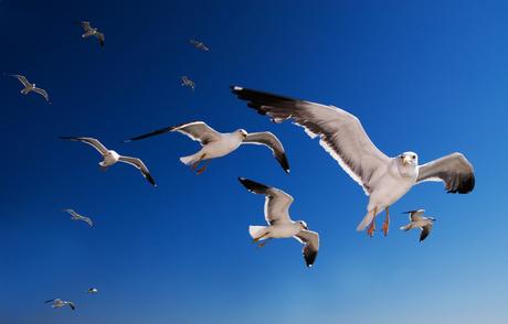 vliegende agressie