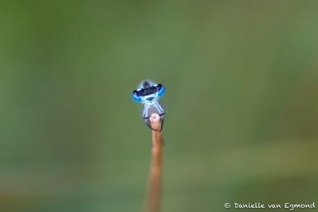 mooie blauwe ogen