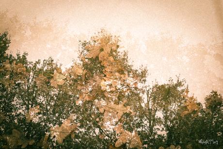 Herfst in dubbele belichting