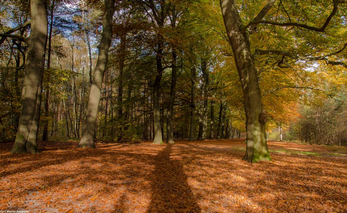 Oranje deken met schaduw van de bomen - Soms is het leven gewoon oneerlijk ik had uit zicht op een vast contract. En vervolgens treken ze te stekken er uit ieder is ze baan kwijt . Geen Opt - foto door sipmaurer op 04-11-2015 - deze foto bevat: bladeren, natuur, herfst, landschap, schaduw, bos, bomen, herfst sfeer, hersft klueren