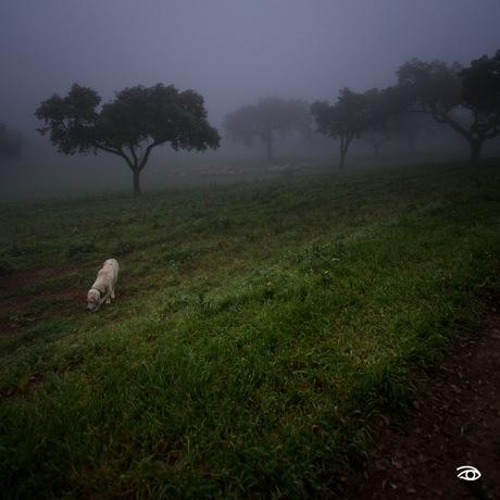 Amalia's morning walk