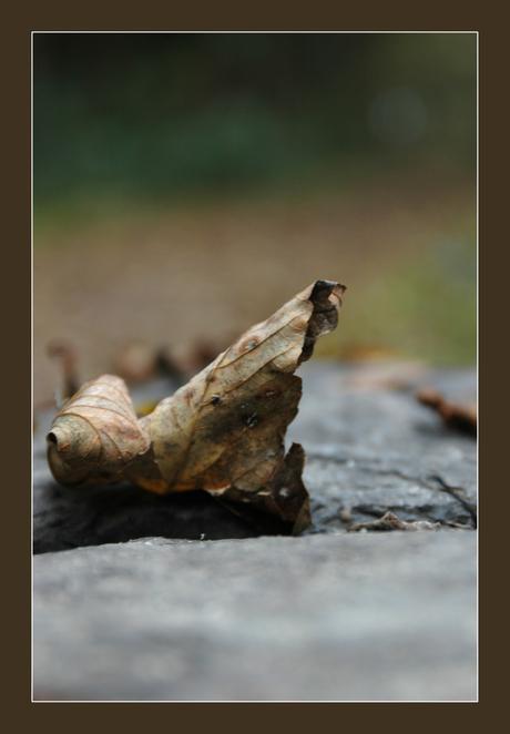 gekruld blad