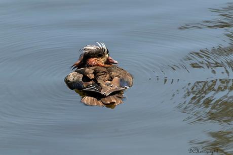 Drijvend op het water