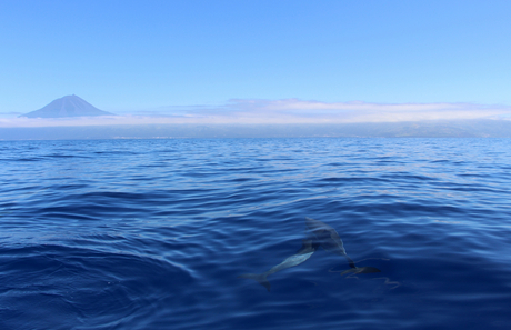 view with dolphins.jpg