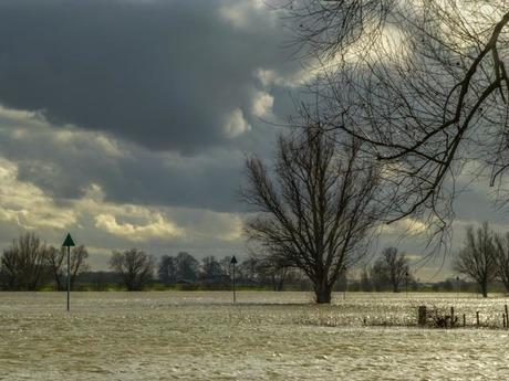 hoog water a.d. IJssel
