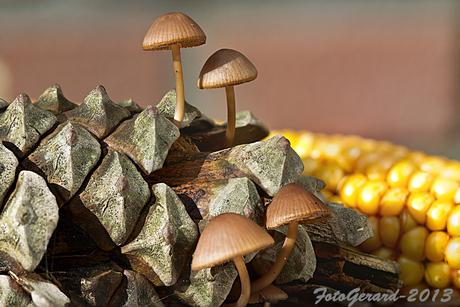 paddenstoel 1