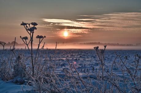 Winterglorie