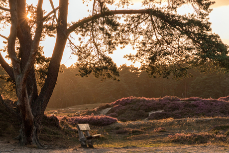 Heidestein Sunset