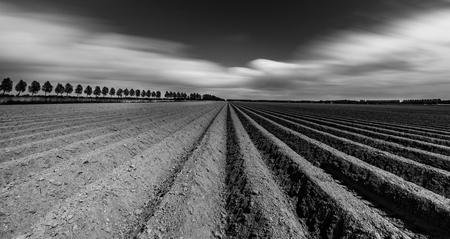 Aardappelruggen in zwart-wit - Verse aardappelruggen in de Noordoostpolder - foto door HMHoogebeen op 23-02-2020 - deze foto bevat: lijnen, landschap, noordoostpolder, langesluitertijd, zwart-wit