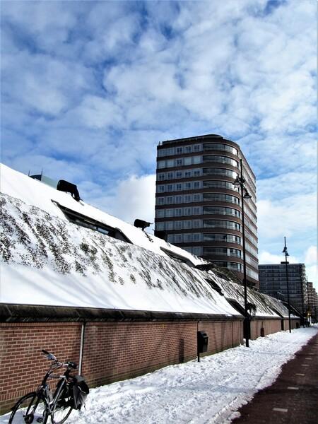 hoog op de dijk - Hoog op de dijk  Gtjs. AJ62 - foto door AJ62 op 26-02-2021 - deze foto bevat: dijk, koe, sneeuw, gebouw