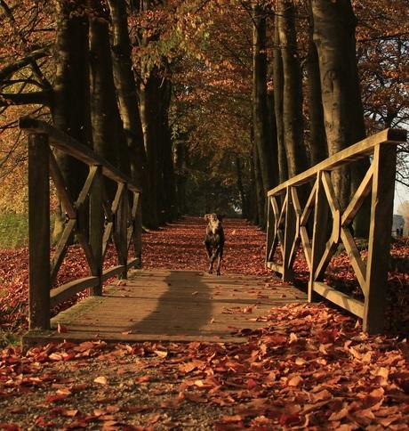 rennend de herfst in