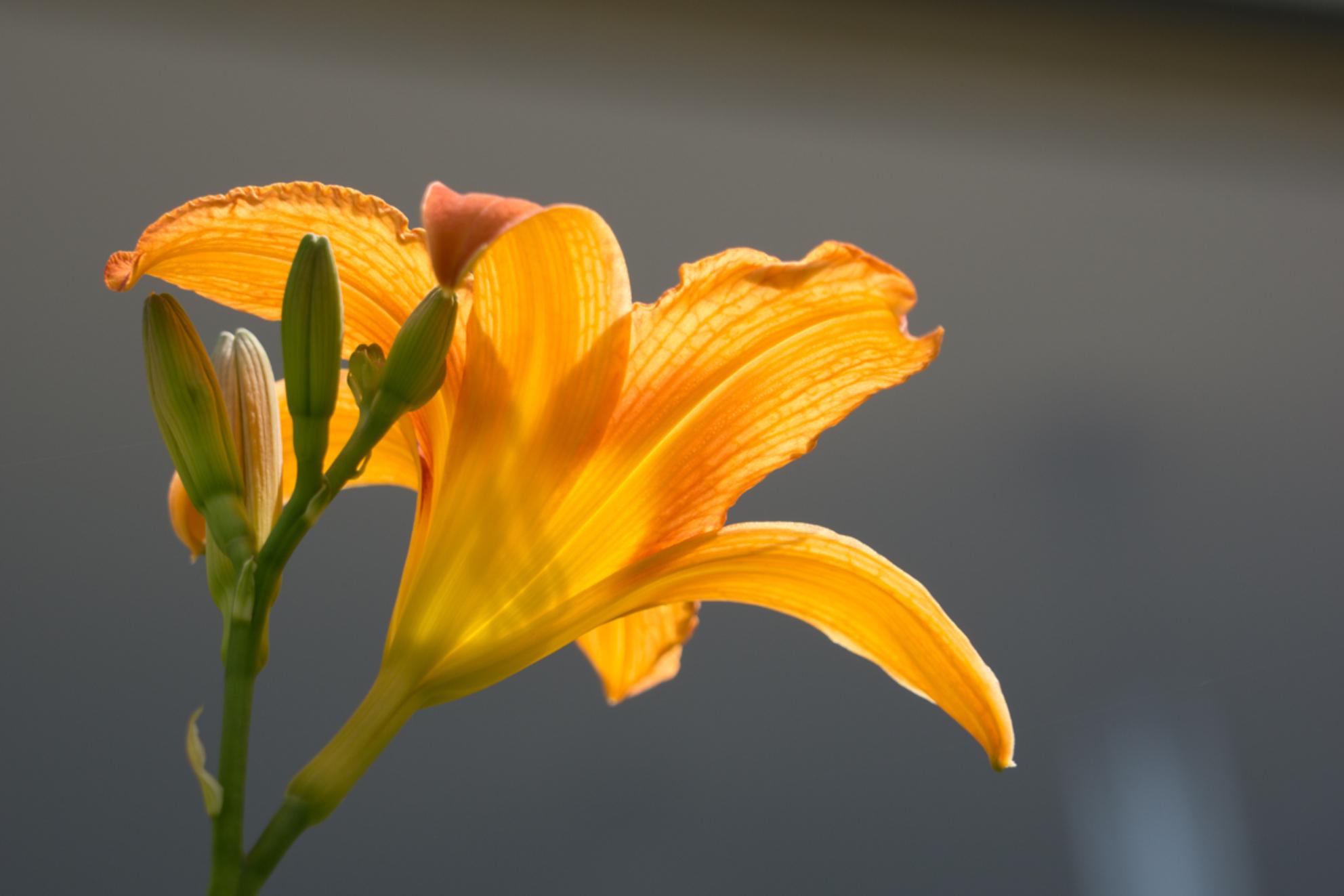 Zomers beeld - - - foto door janfolkert55 op 31-07-2015 - deze foto bevat: bloem, oranje, zomer, bloei - Deze foto mag gebruikt worden in een Zoom.nl publicatie