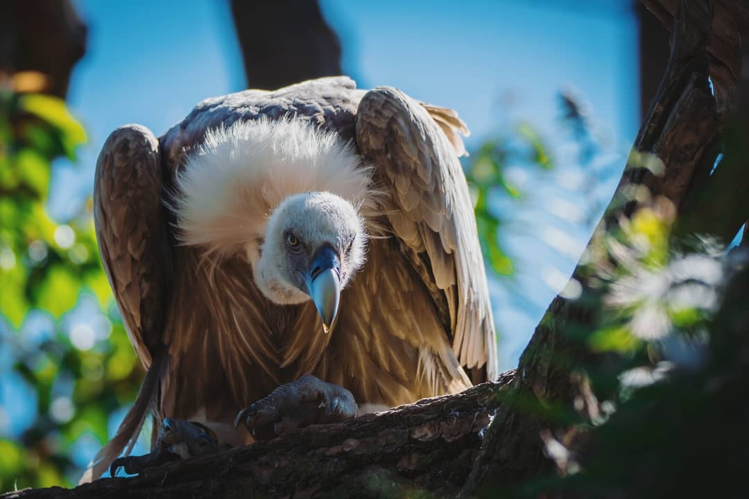 Hey you - - - foto door kidji op 12-07-2018 - deze foto bevat: dierentuin, dieren, vogel, wildlife