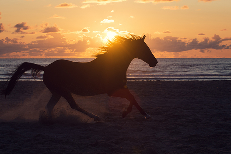 zonsondergang paard