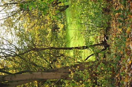 Herfst in Spaarnwoude