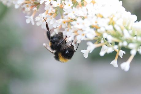 Snoepen van de Nectar